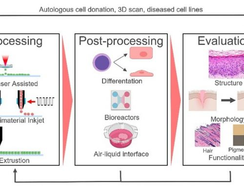 What is Bioprinting – Part 2 of 6: The Pre-printing/Pre-Processing Step