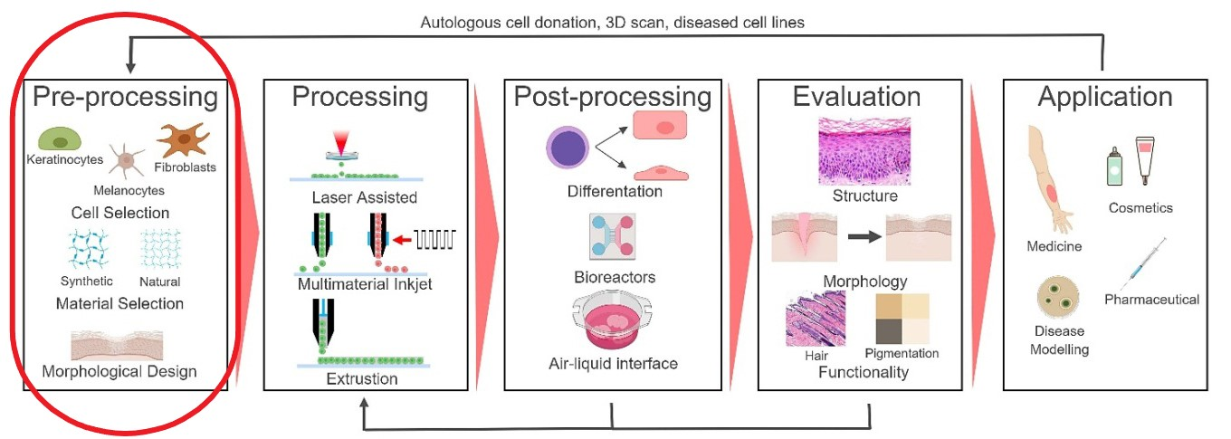 In Figure 1. we can see an example of these process step (source: Regenerative Medicine Frontiers Journal article: Regen Med Front. 2019;1:e190004